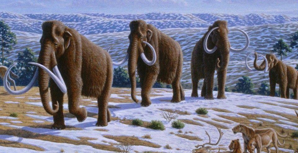 ช้างแมมมอธ