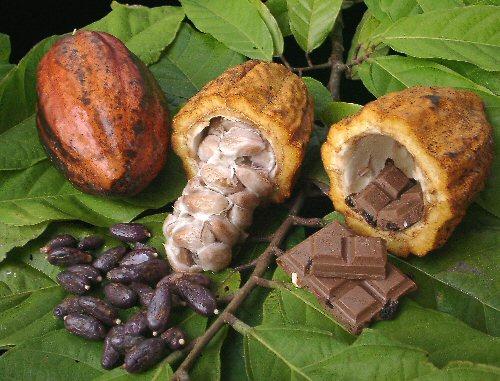 ทานช็อคโกแลตคลายเครียดได้ จริงหรือไม่ ?